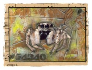 WS Spiders-30